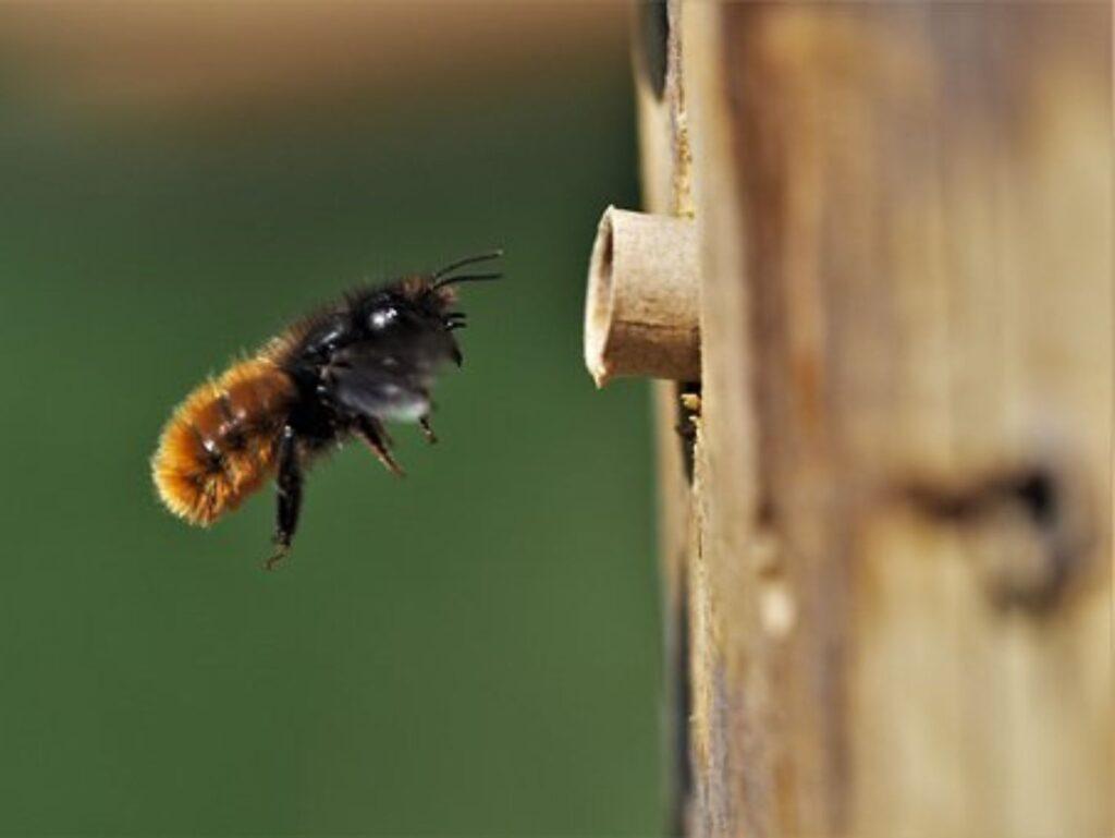 Bolig til vilde bier