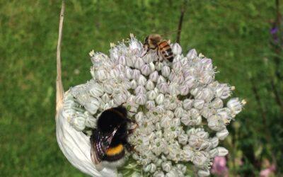 Konkurrence mellem bier