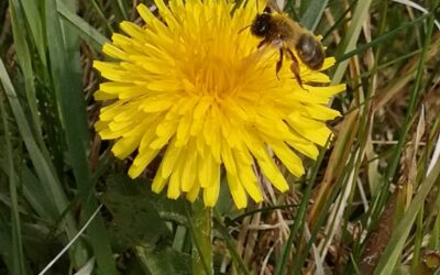 Topforskere: Her er fakta i debatten om bier