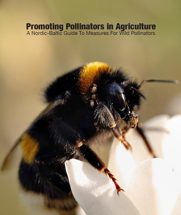 Promoting Pollinators in Farming